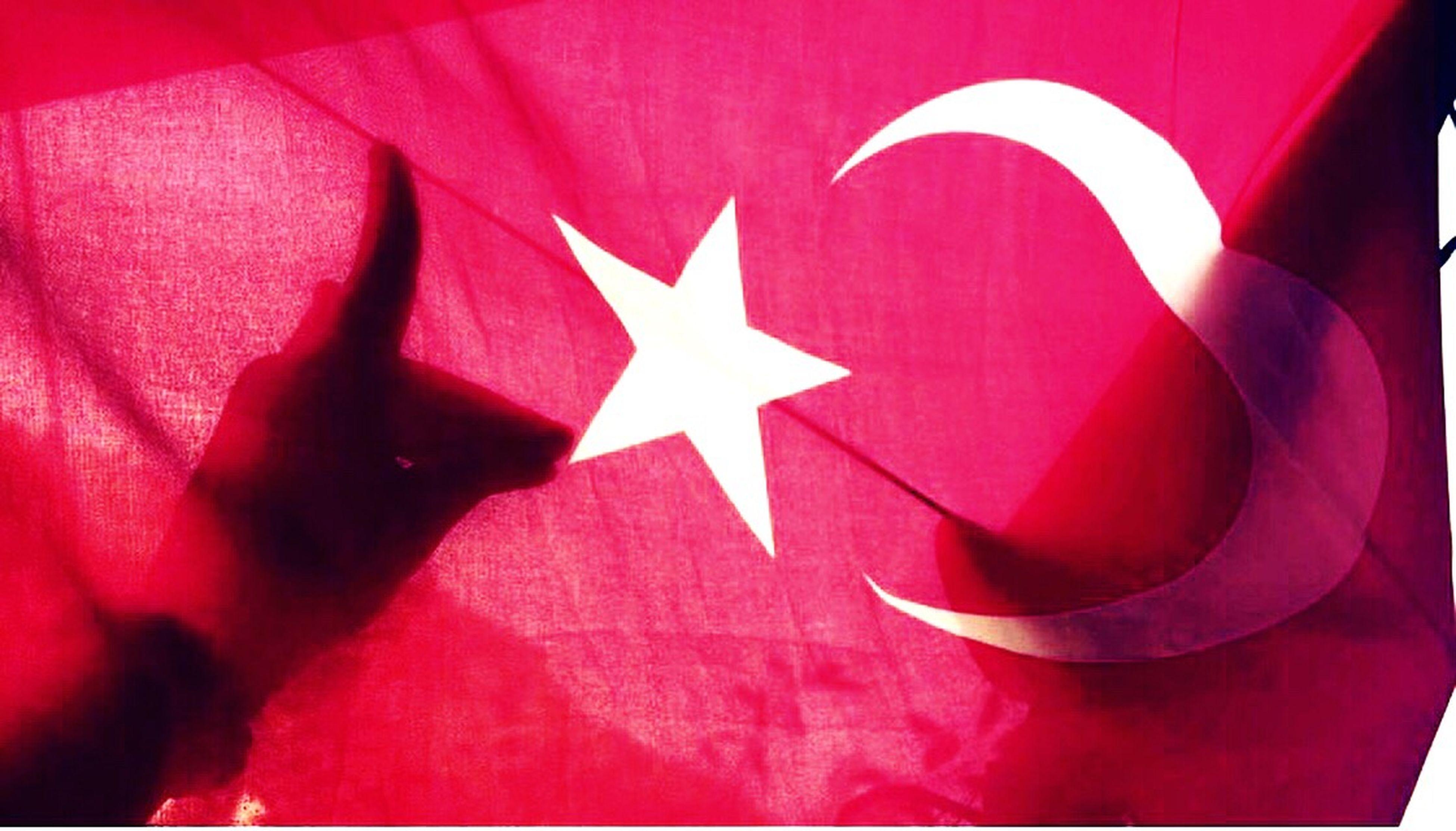 Bozkurt olunmaz bozkurt doğulur KırımTürkü