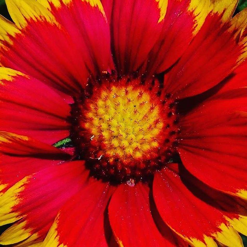 Flowersandmacro Af_floral➡🌼flowers Red 9Vaga_ColorRed9 Macro Af_macro➡🔎macro Nature Flower Redandyellow Tt_wt_rflora Ptk_flowers_red1 Hello_red