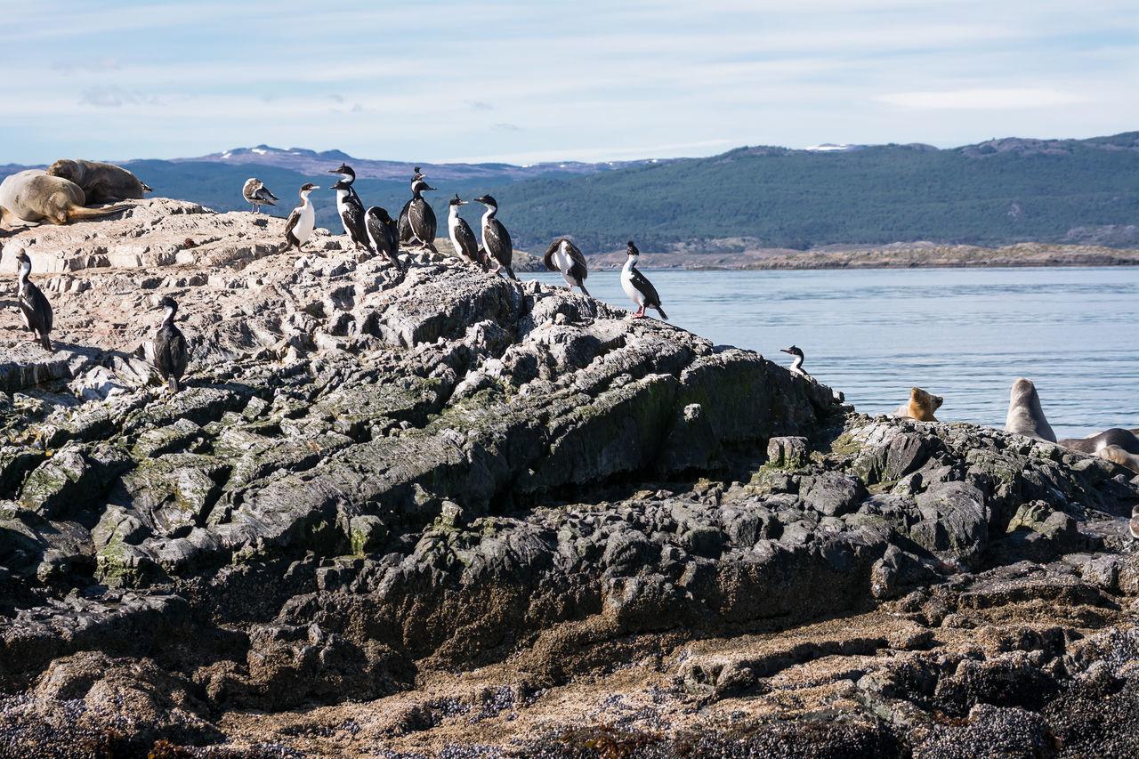 Cormorants on island in Beagle channel Argentina Beagle Channel Bird Colony Cormorant  Cormorants Land Of Fire Patagonia Seabirds Shag Tierra Del Fuego Ushuaïa
