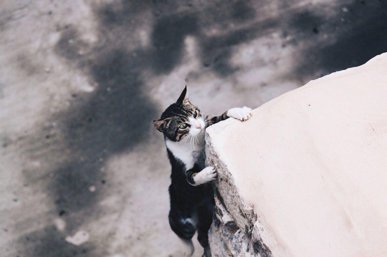 Beautiful stock photos of kitty, Animal Themes, Building Exterior, Cat, Climbing
