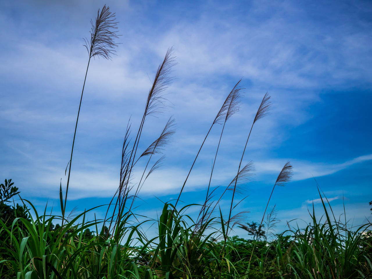 sky, growth, nature, cloud - sky, blue, beauty in nature, plant, grass, tranquility, tranquil scene, scenics, no people, low angle view, field, day, outdoors, green color