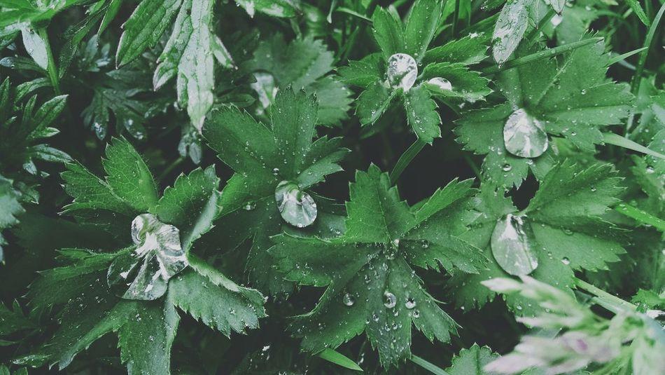 Beautiful stock photos of green, Beauty In Nature, Close-Up, Detail, Drop