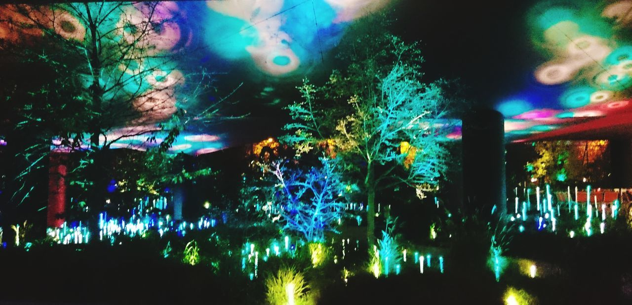 illuminated, night, multi colored, celebration, arts culture and entertainment, no people, nightlife, tree, outdoors, disco lights, close-up