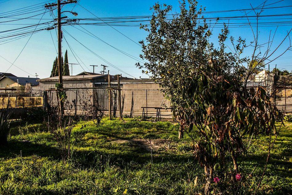 Watts Los Angeles Backyard Open Edit 113th California California Love