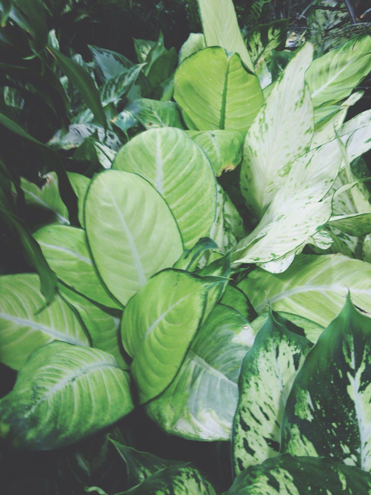 Beautiful Nature Green