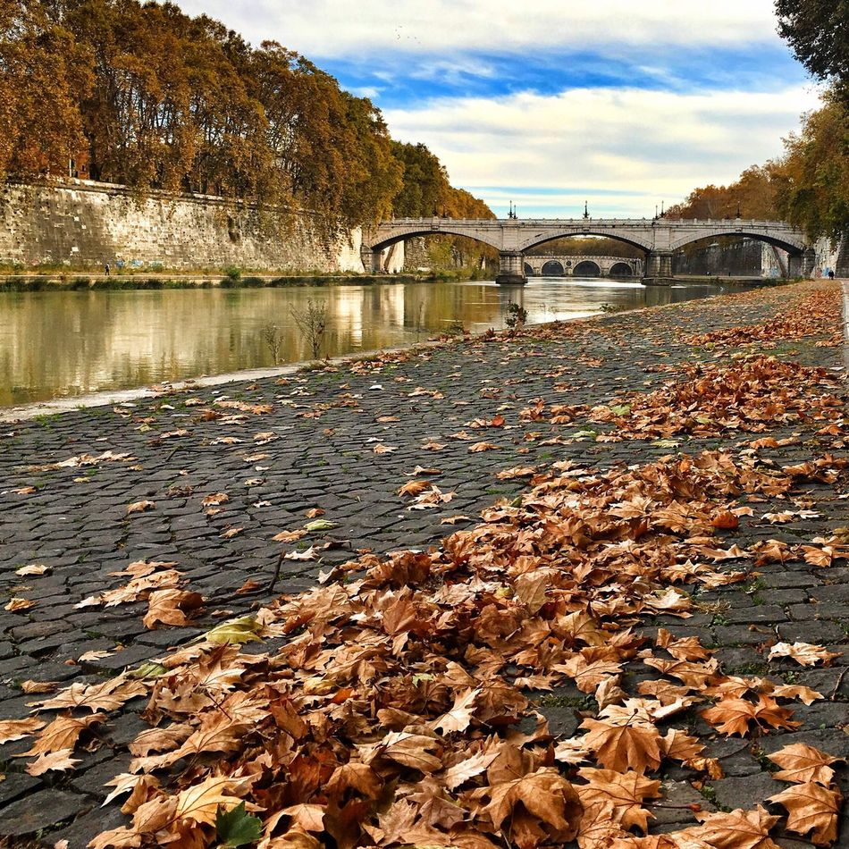 November in Rome 🍂🍂🍂 Showcase: November November Rome Roma EyeEm Nature Lover Yellow Leaves Trastevere Italy Travel Photography Traveling Tranquility Enjoying Life Taking Photos Hanging Out Cityscapes Cityscape Riverside River View Riverscape Riverwalk River Collection Autumn Autumn Leaves Colors Of Autumn Autumn Collection