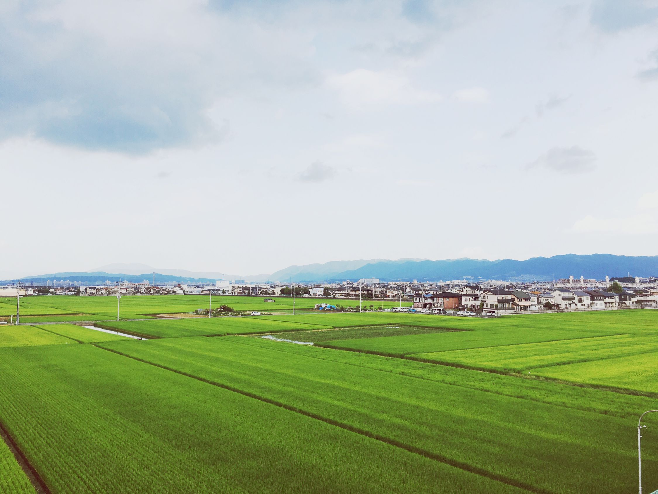 Coolgreen Nativeplace💗 Kyoto Japan Summer Rice Field Cool Green Relaxing Enjoying Life Summervacation