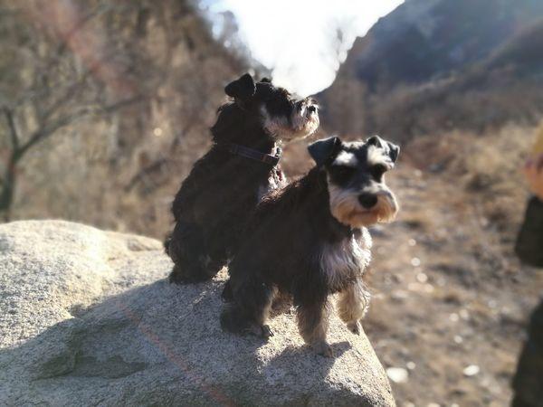 EyeEm Selects Dog Pets Outdoors Animal Domestic Animals