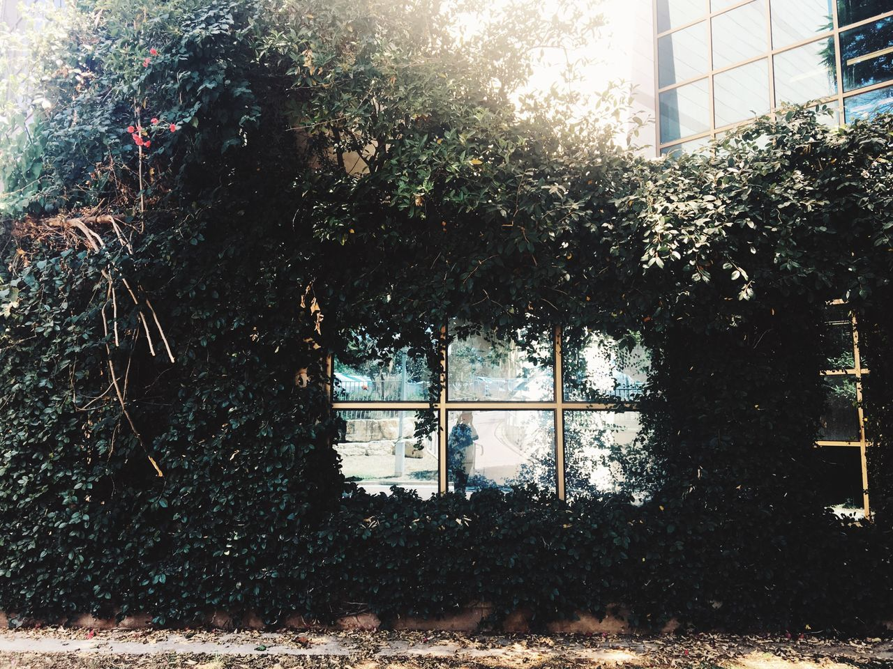 window, tree, architecture, day, built structure, no people, sunlight, growth, building exterior, plant, outdoors, nature