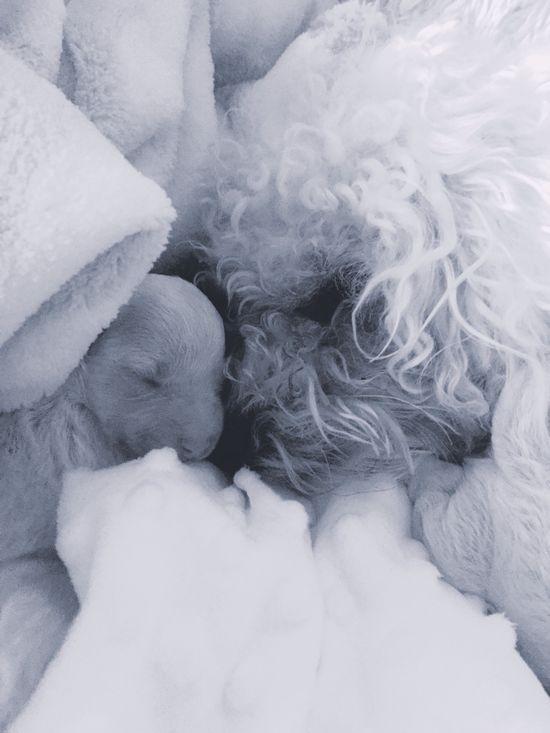 I Love My Dog Bichonfrise New Life Black & White Blackandwhite Photography Eyemphotography Puppy Cute Pets Full Of Love