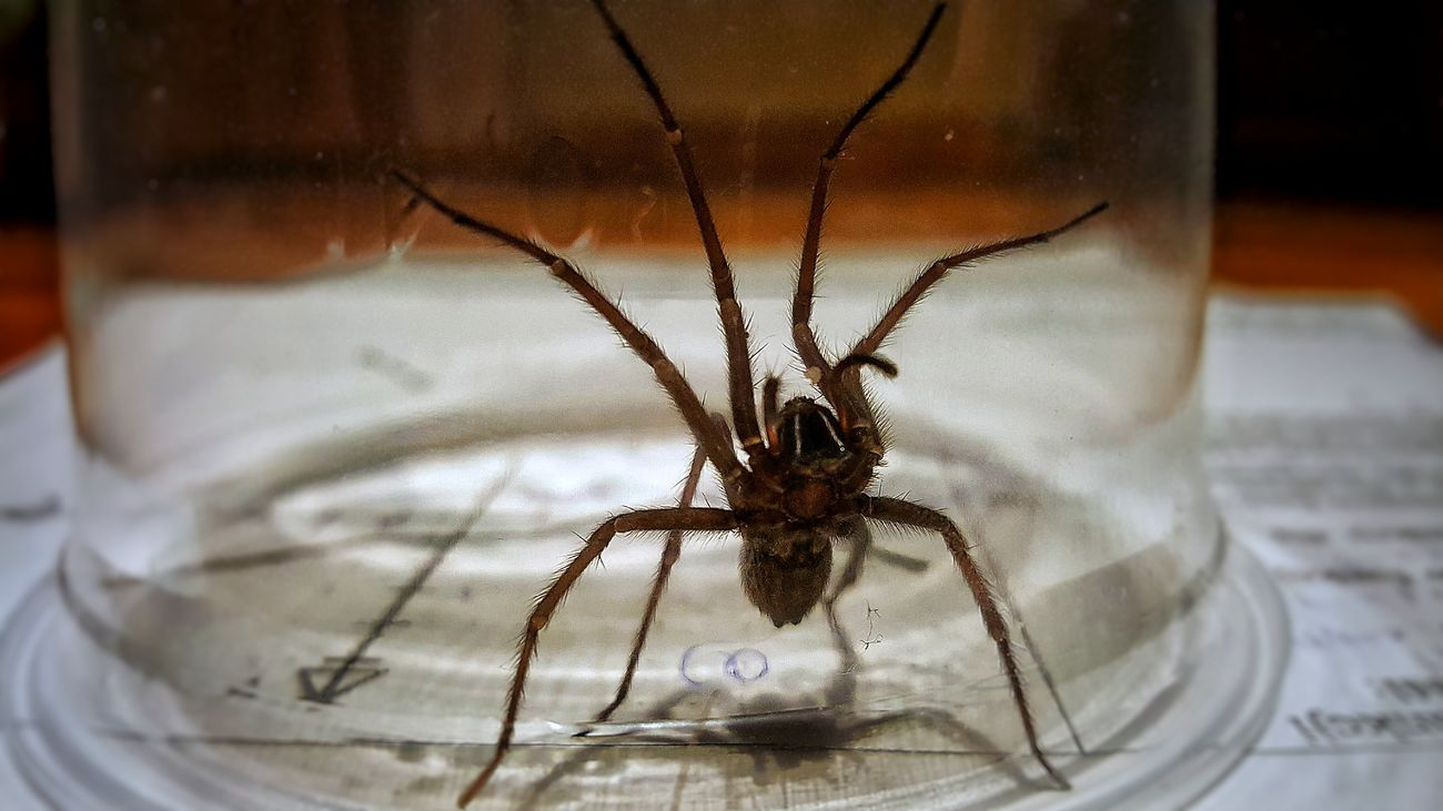 Hello! I AM NOT TORTURING THIS LOVELY SPIDER! I just wanted him to leave my house and I took him outside. Animal Themes Animals In The Wild Close-up Indoors  Insect Nature No People One Animal Spider Survival