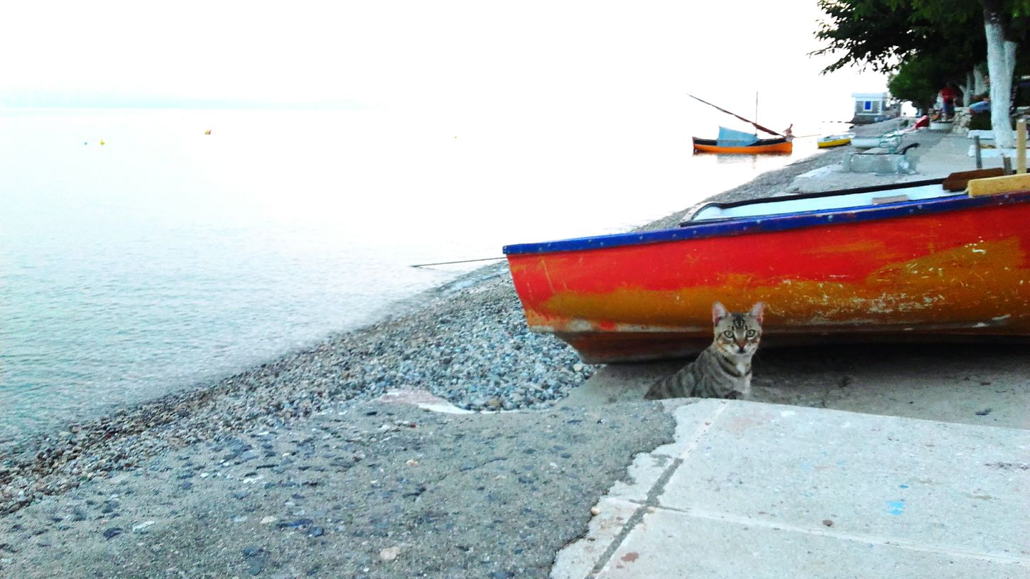 Cat Enjoying Life Cats 🐱 Cats Cats Cats Kitty Cats Eyes Cat♡ Cute Cats Like4like Likeforlike Catlovers Pussycat Kittens Hi! Cats Cute AF Hello World Limni Greece Cat Lovers Sea Water Boats Sky Fresh AF