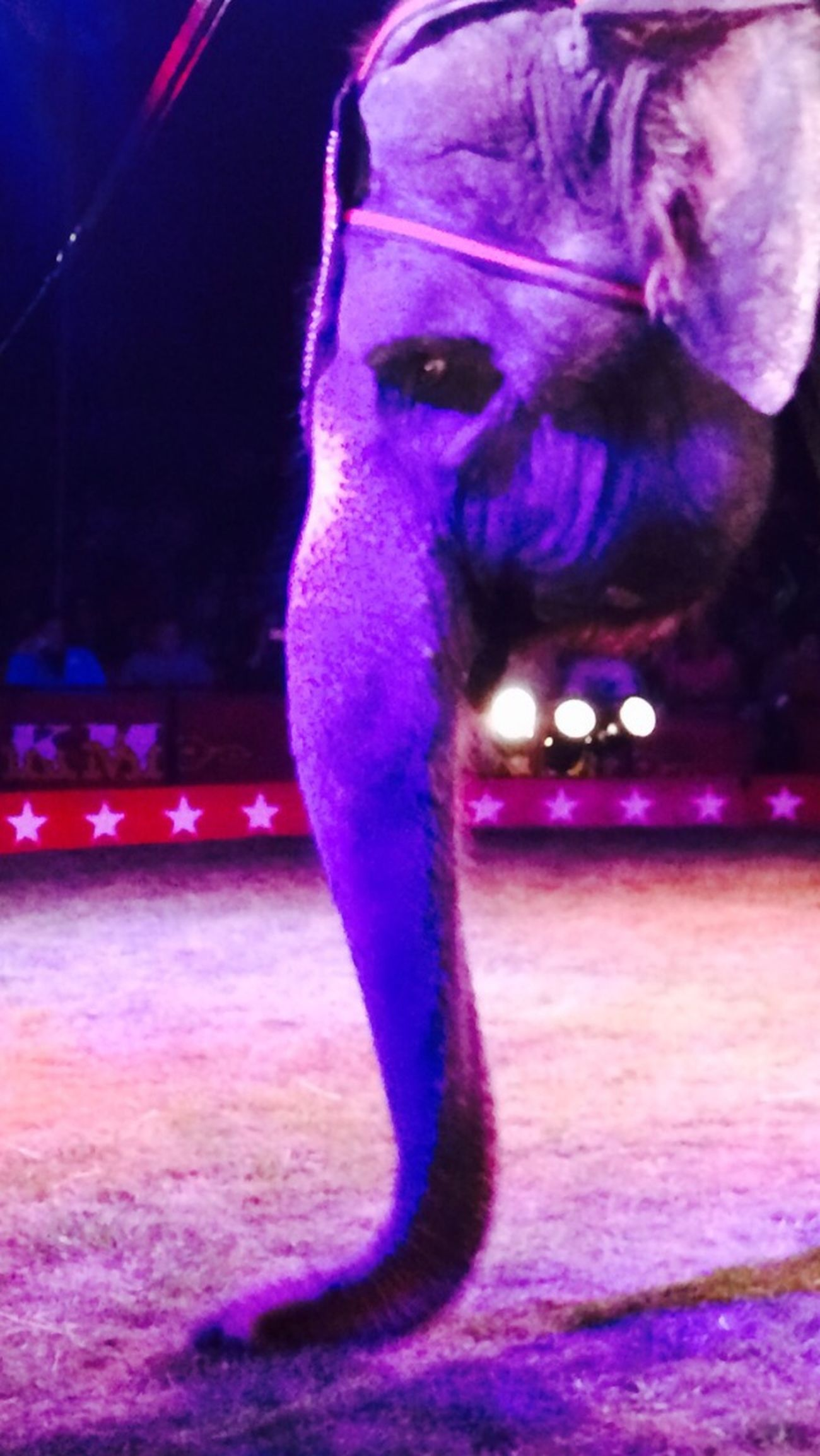 Elephant Melancholy Trapped The Purist (no Edit, No Filter)