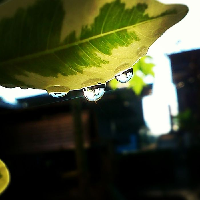 great day Water Reflections Water Droplets Lens Flare Morning Xperiaphotography Bukidnon Bukidnonmyhome
