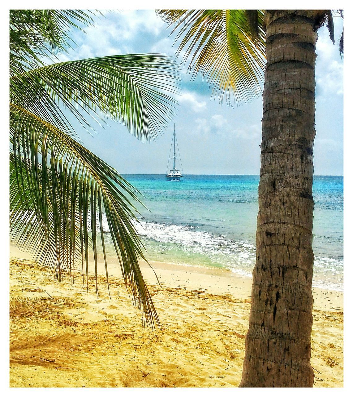 sea, beach, palm tree, tree, tree trunk, nature, beauty in nature, water, sand, scenics, horizon over water, tranquility, tranquil scene, outdoors, sky, no people, day