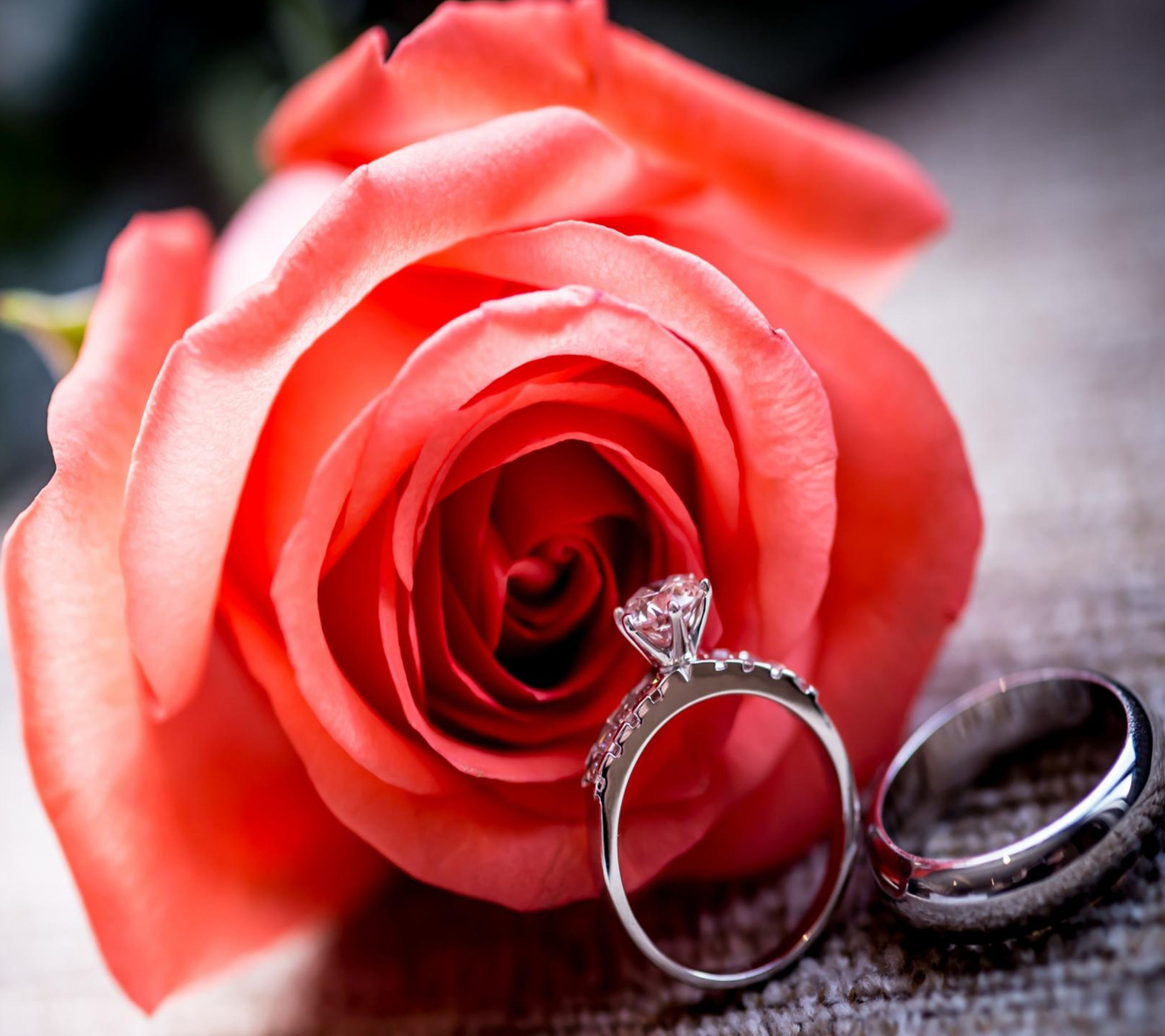 jewelry, ring, flower, wedding, rose - flower, red, close-up, elegance, beauty in nature, no people, nature, outdoors, day, flower head