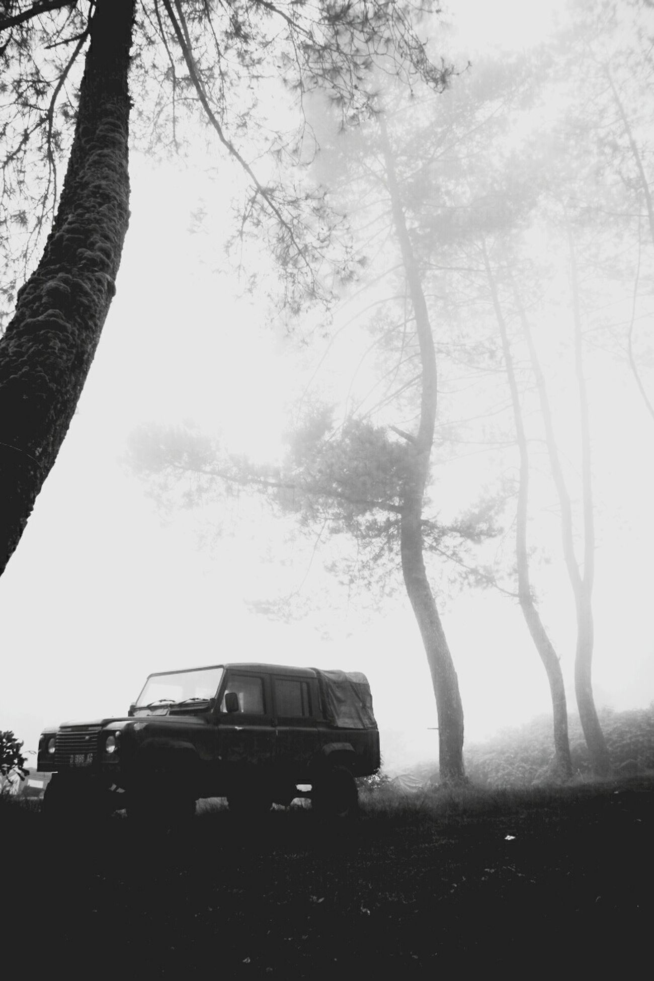 A dreamy state in morning mist Taking Photos Hello World Transportation Landscape #Nature #photography Indotravellers Westjavaindonesia Enjoying Life Black And White Black And White Photography First Eyeem Photo Bandung, West Java Landrover  Landroverphotos Landroverlove