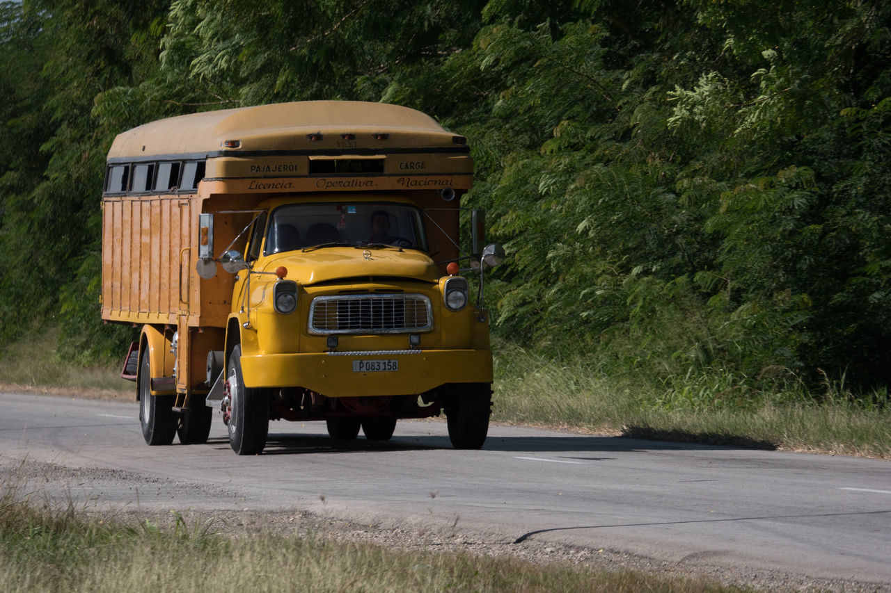 transportation, road, land vehicle, mode of transport, yellow, day, outdoors, no people, tree, nature