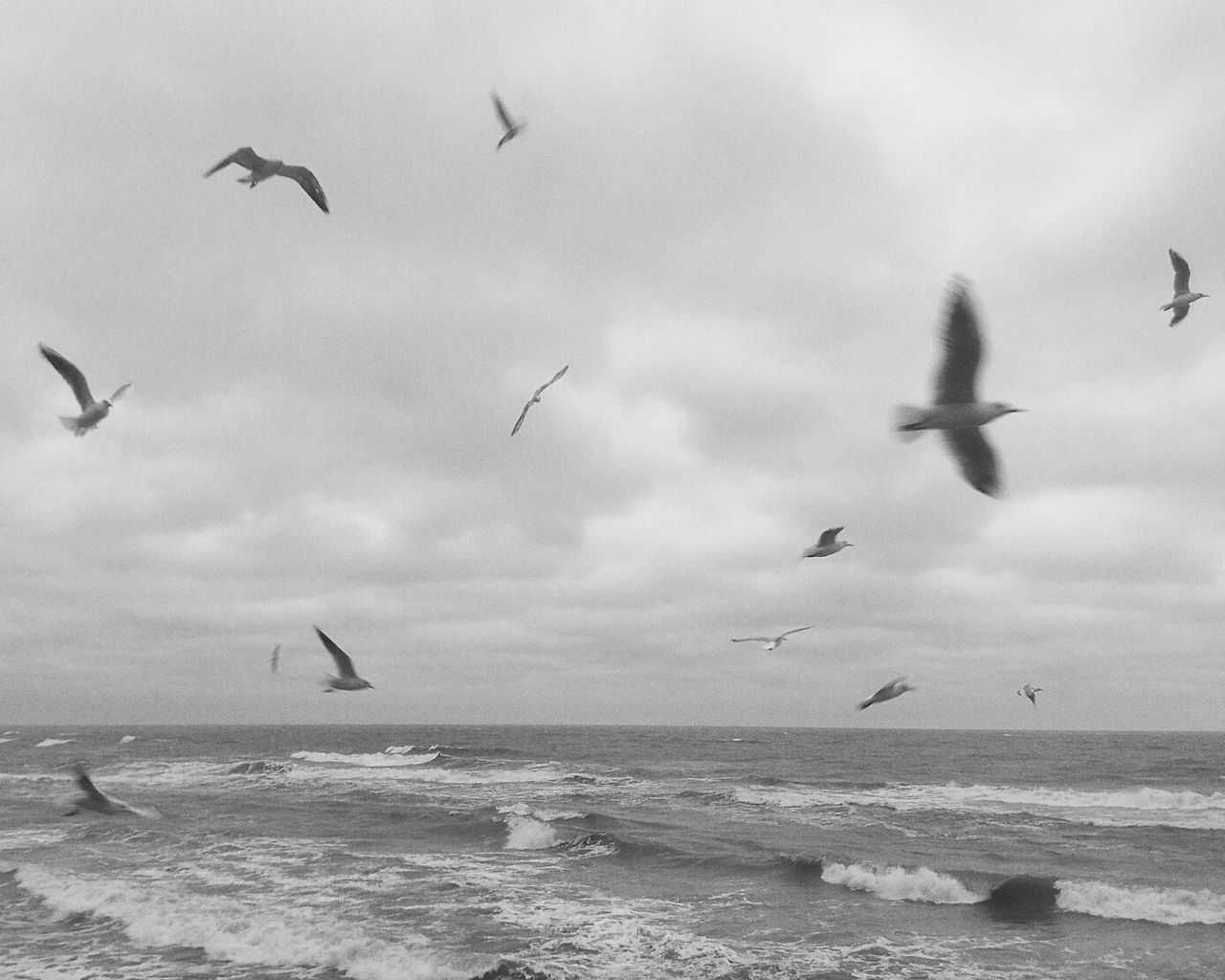 flying, bird, animals in the wild, animal themes, sea, sky, large group of animals, nature, flock of birds, mid-air, water, motion, animal wildlife, spread wings, cloud - sky, beauty in nature, tranquility, day, no people, outdoors, horizon over water, seagull, scenics, wave