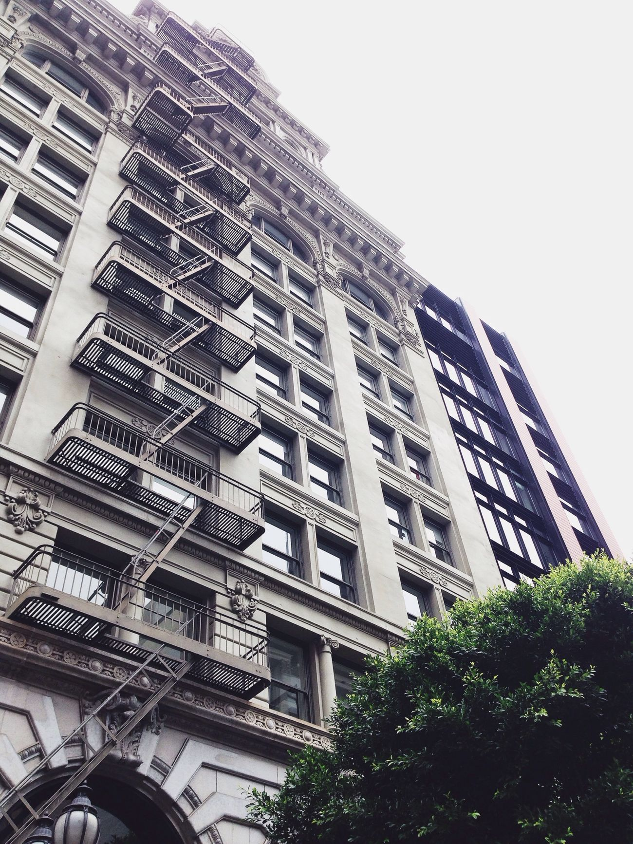Look Up And Thrive Building San Francisco