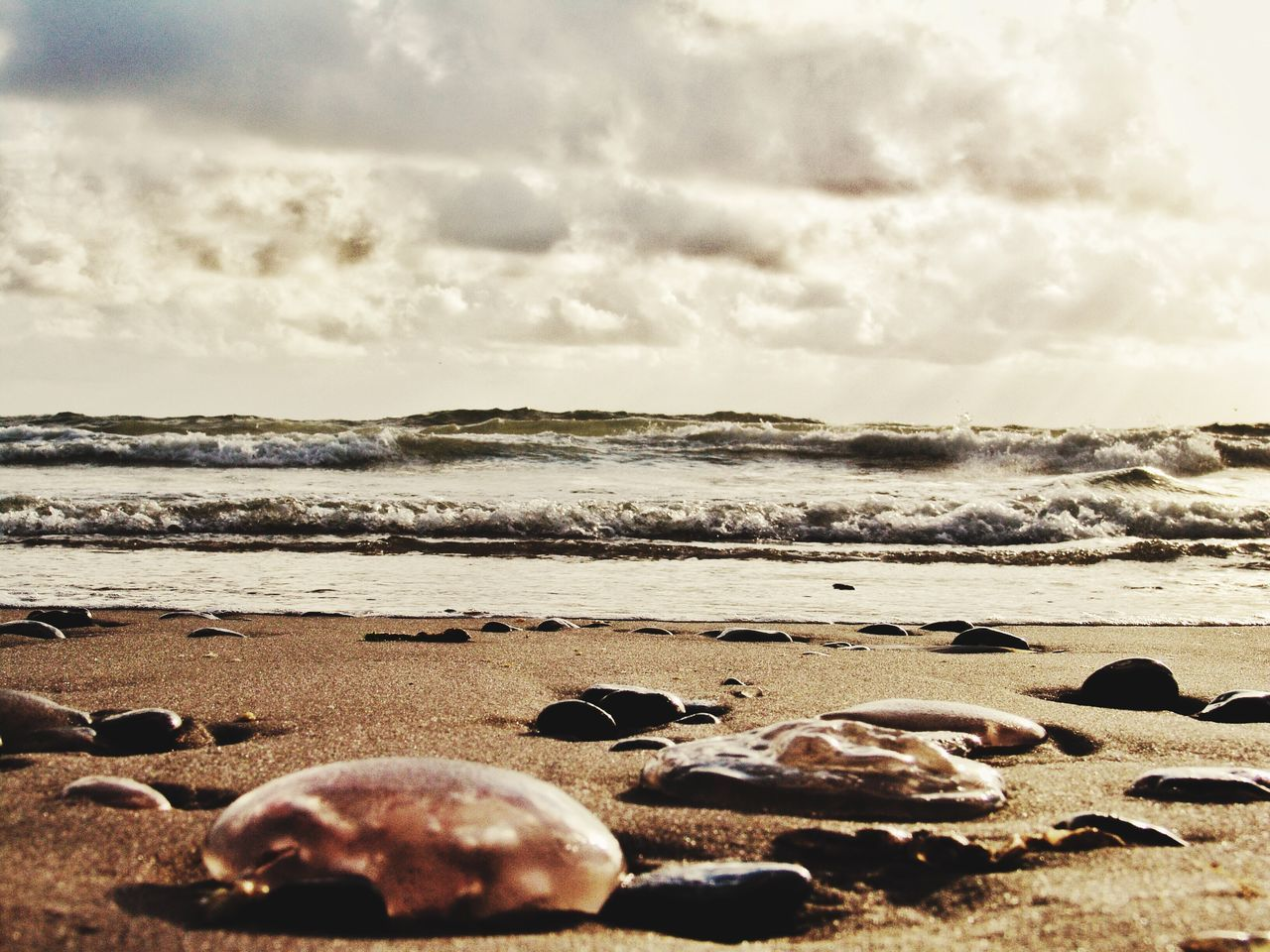Hollidays Urlaub Strand Meer Sea Nordsee Northsea Danmark Summer Summertime Sommer Quallen Sand Showcase July
