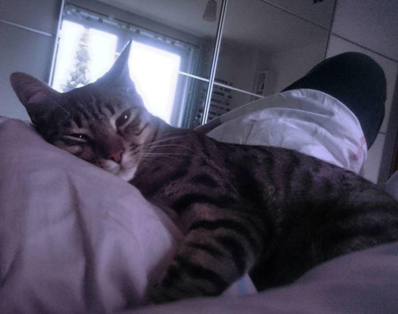 Birthday Boy lässt uns zur Feier des Tages länger schlafen. Jetzt sind unsere Jungs schon ein Jahr alt 😍 Rayado_the_cat Birthdaycat