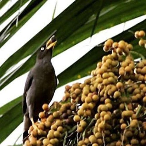 Yummy.... big logistic. Bird Birding Birdsofinstagram Birdporn Birdphotography Bird_of_instagram Best_birds