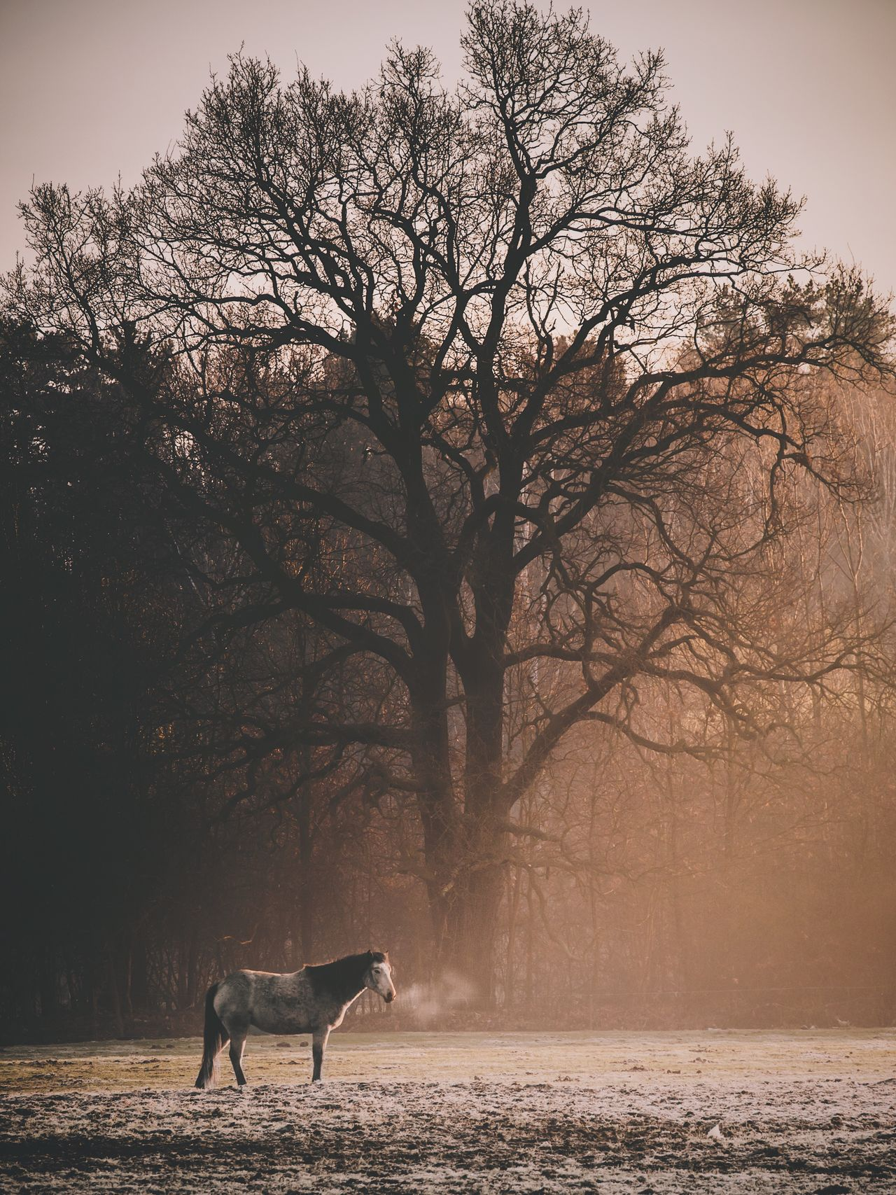 One Animal Animal Themes Tree Domestic Animals Bare Tree Mammal Nature Outdoors No People Day Branch Beauty In Nature Pets Winter Sky