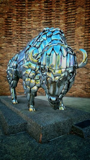 Taking no Bull Taking Photos Popart Steetart Nobull Streamzoofamily Chrome Capture Check This Out