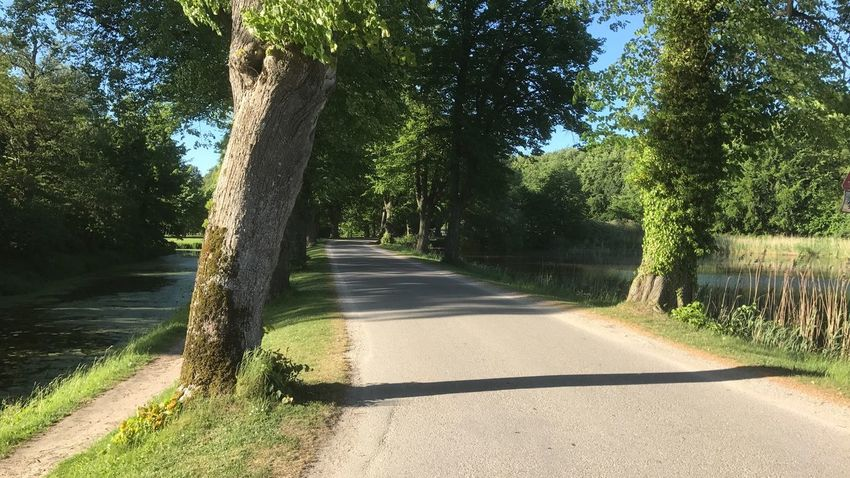 Tree The Way Forward Sunlight Day Nature Road Shadow Outdoors Tranquil Scene No People Growth Tranquility Green Color Beauty In Nature Scenics Grass Landscape