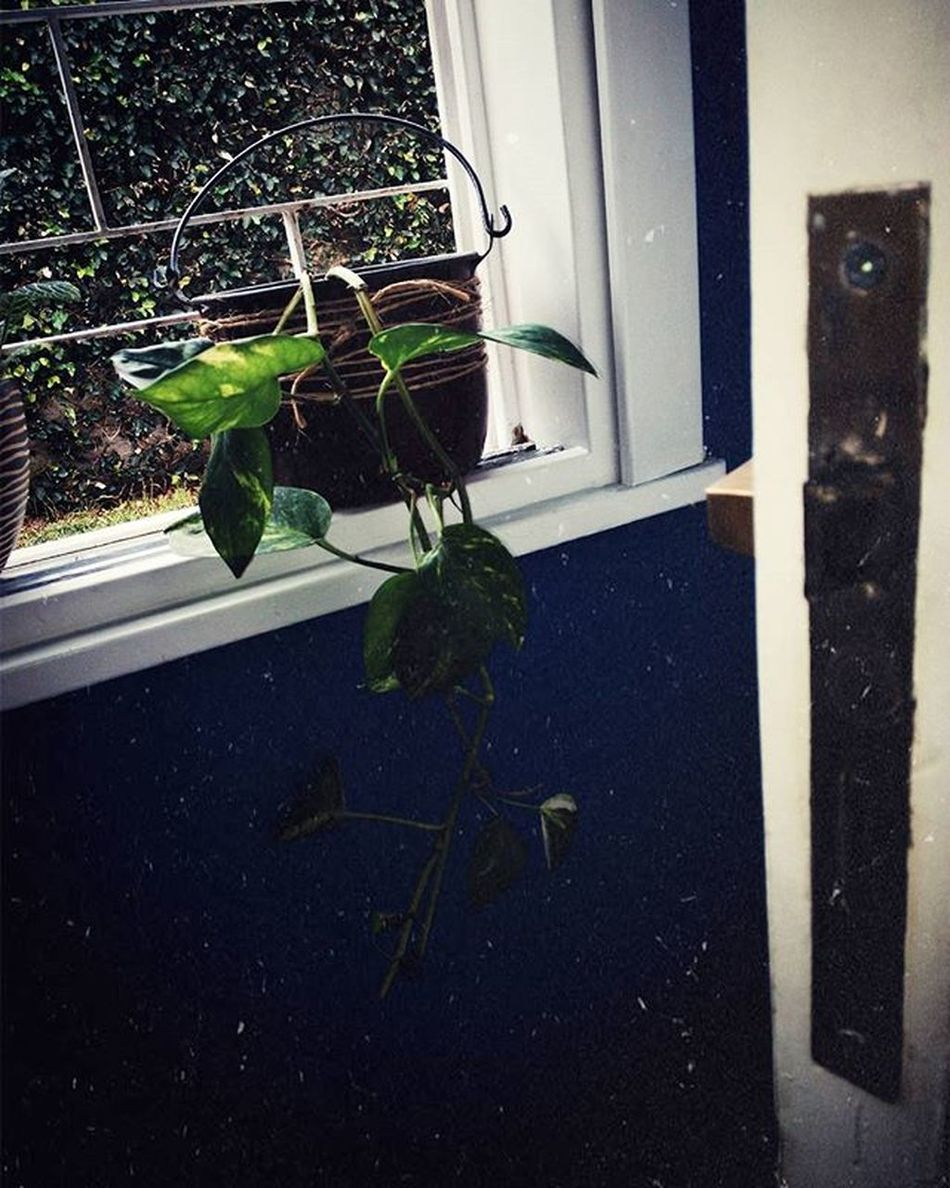 🌿 Plant POTUS Contraste