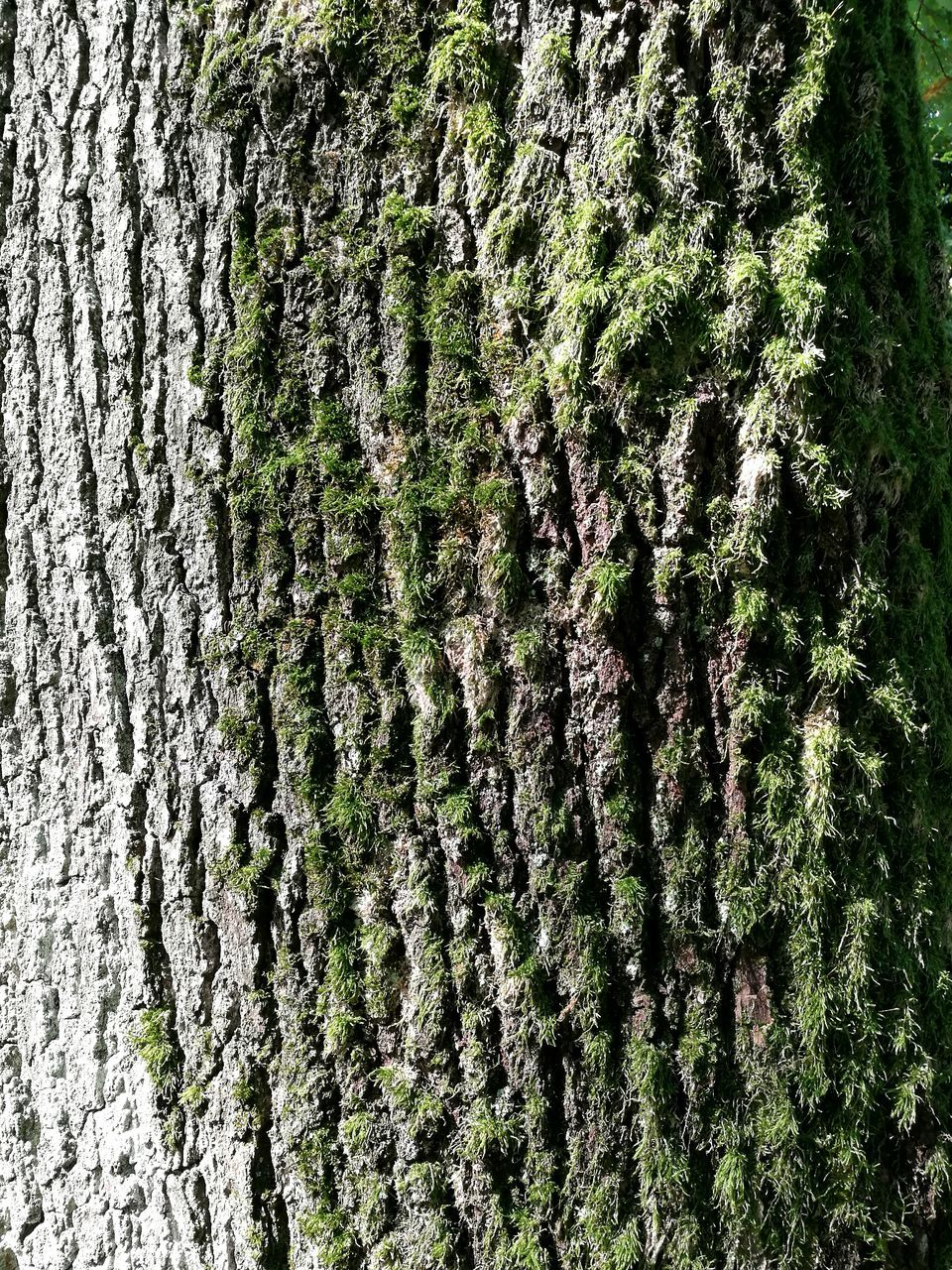 tree trunk, tree, growth, nature, textured, moss, day, no people, green color, close-up, full frame, outdoors, beauty in nature, forest