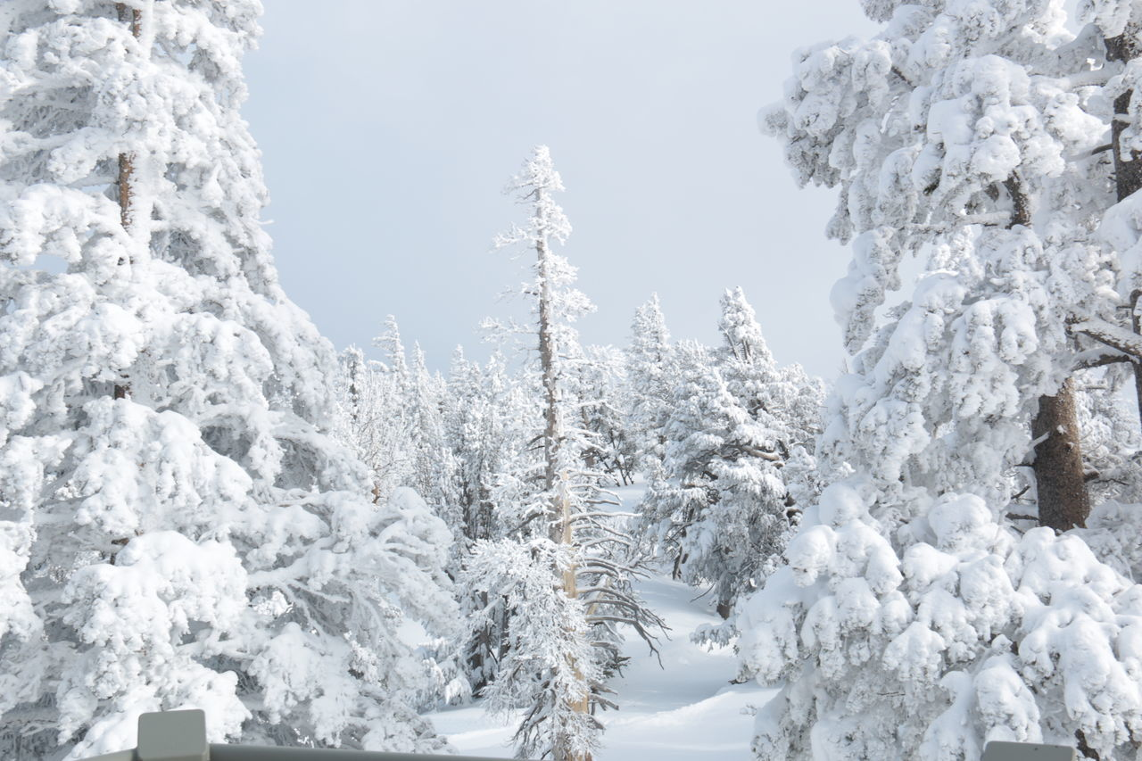Record breaking snow depth, 13 meters = 40 feet - Winter Wonderland Beauty In Nature California Mountains Close-up Cold Temperature Day Heavenly Ski Resort Ice Landscape Mountain Nature No People Outdoors Polar Climate Scenics Sky Snow Snow Covered Trees Snowing Tree Winter
