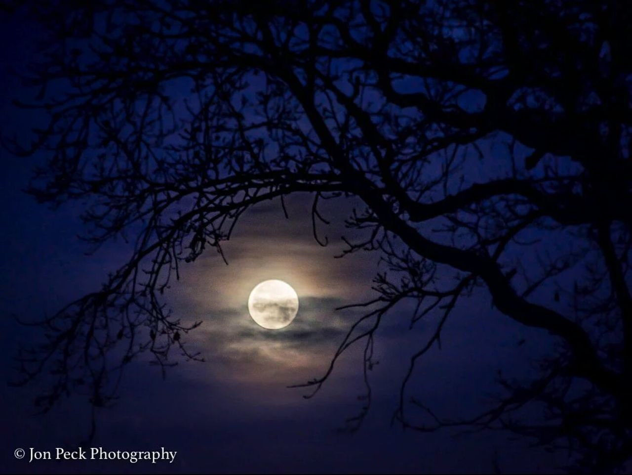 moon, tree, silhouette, night, beauty in nature, nature, branch, scenics, tranquility, no people, low angle view, outdoors, bare tree, sky, astronomy