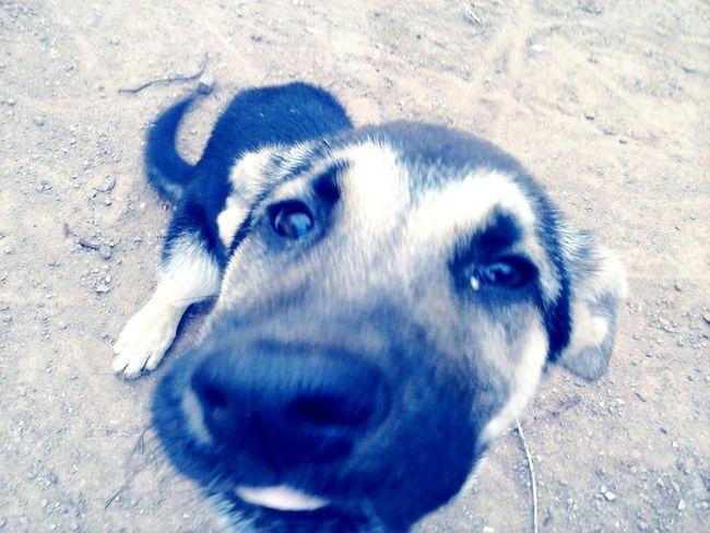 Te perdiste pequeña milenka, algun dia nos volveremos a ver♡ My Pets :) Pets Cute Pets