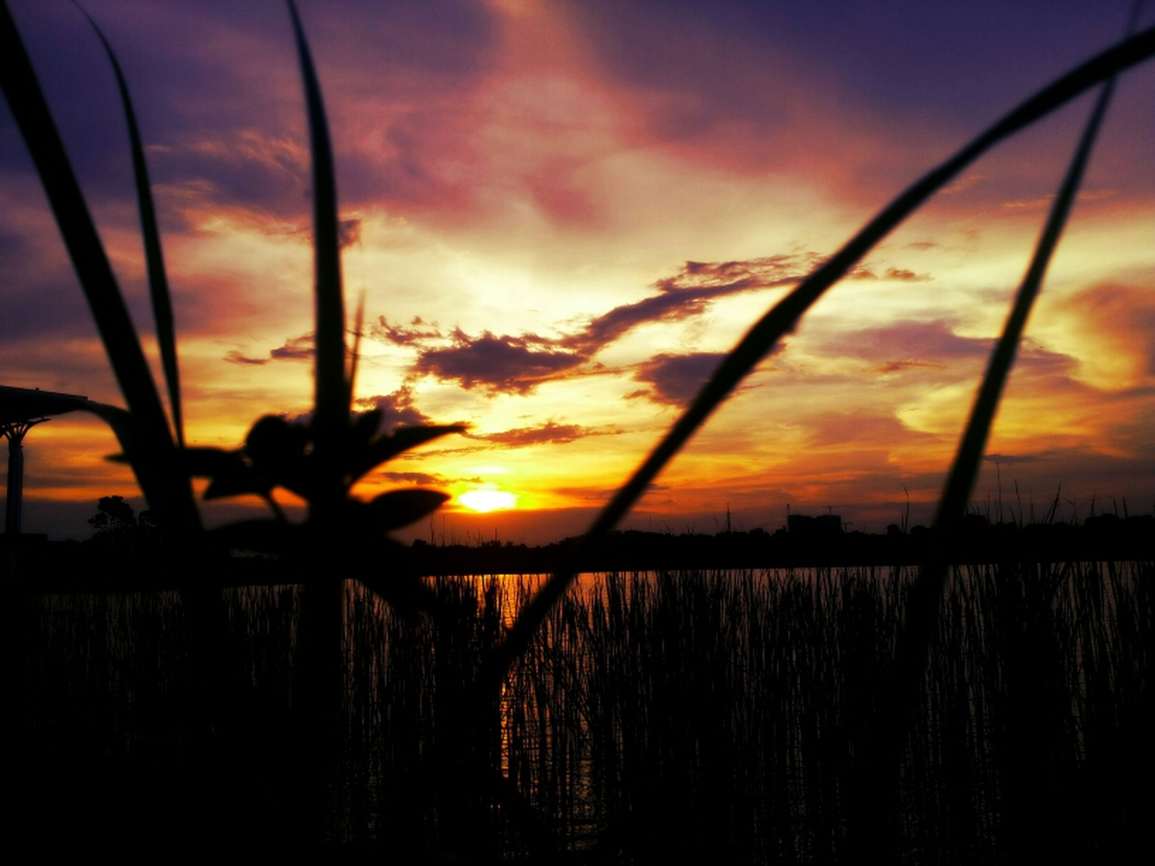 sunset, sky, orange color, water, scenics, tranquility, silhouette, tranquil scene, beauty in nature, nature, cloud - sky, reflection, idyllic, sea, sun, dramatic sky, cloud, plant, lake, horizon over water