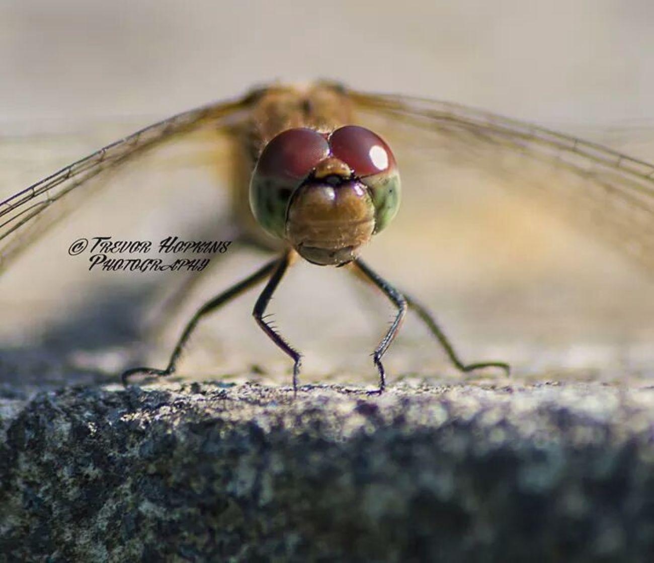 Give us a smile... Macro_collection Macro Clique EyeEm Best Shots - Macro / Up Close Macro