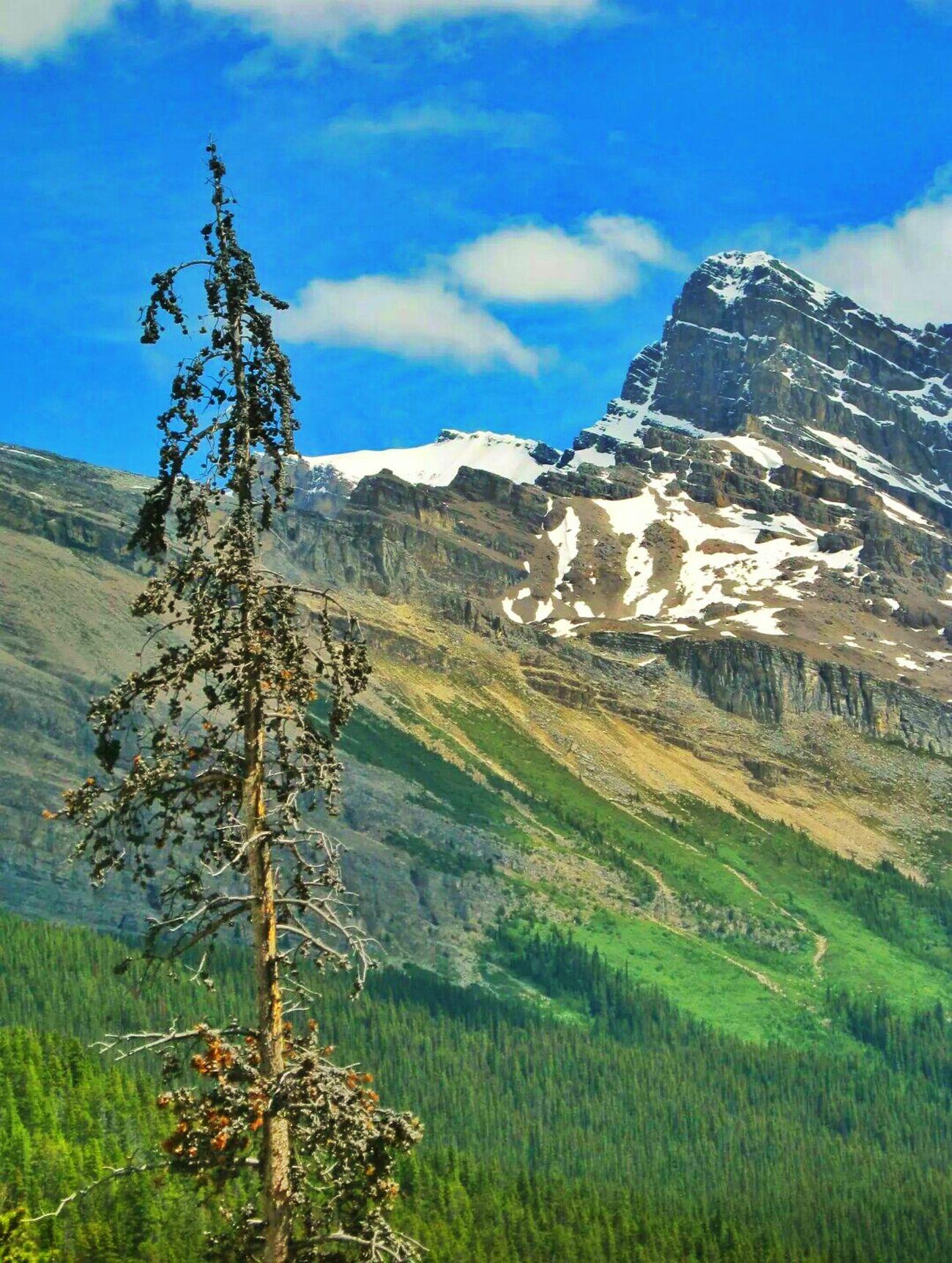 Landscape Mountains Tree