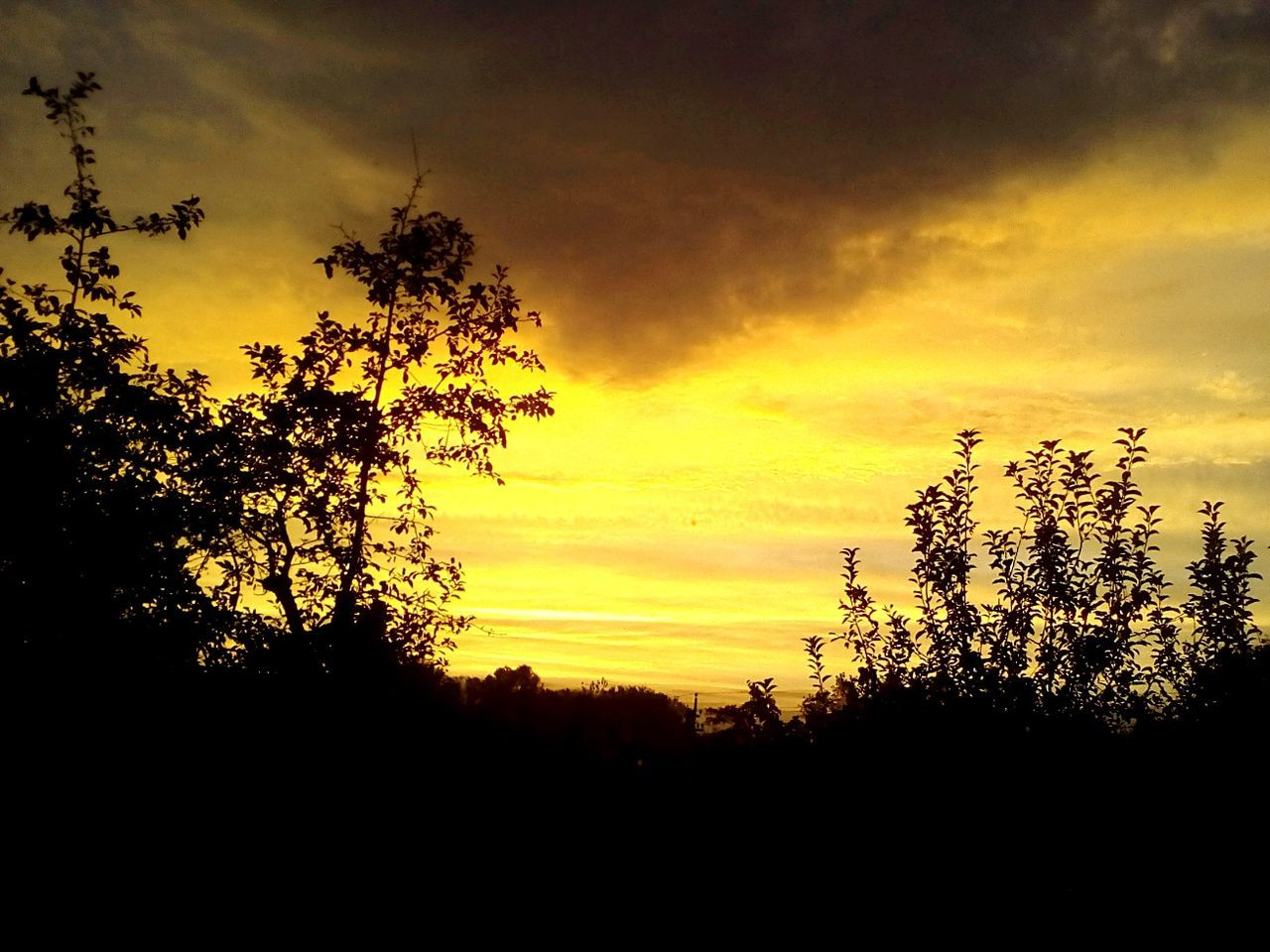 sunset, tree, silhouette, nature, beauty in nature, scenics, sky, tranquility, cloud - sky, tranquil scene, no people, dramatic sky, outdoors, growth, yellow, forest, landscape, day