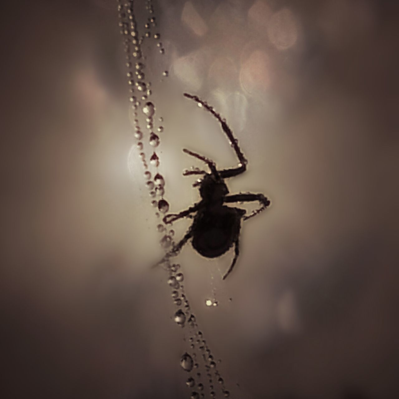 Spider Macro Spiderweb Nature Naturelovers Nature Photography Moody Moodygram Macro_collection Macro Photography Droplets Water Droplets Cobweb Close Up Beautiful Beautiful Nature Bokeh