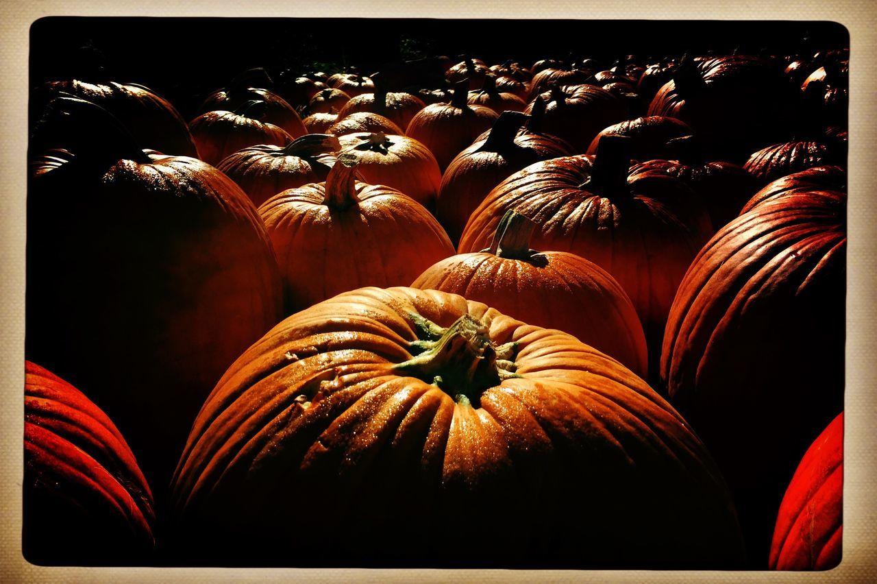 Pumpkin fields forever. Pumpkin Hipstamatic Autumn Diminishing Perspective EyeEm Best Shots Tranquil Scene Long The Way Forward Vanishing Point Cloud - Sky Photojournalism Beautifully Organized