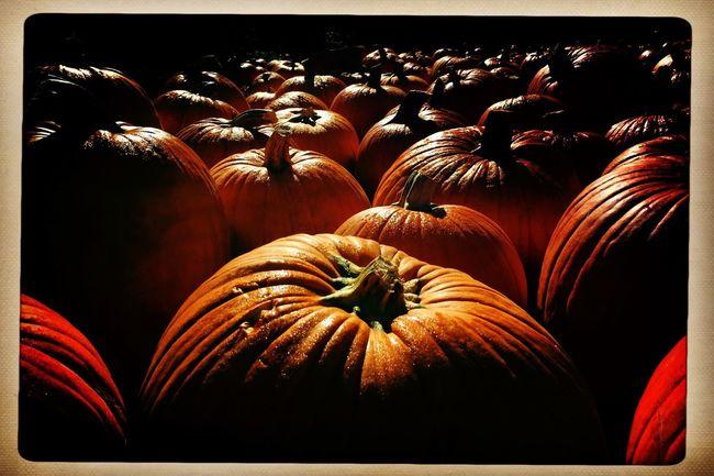 Pumpkin fields forever. Pumpkin Hipstamatic Autumn Diminishing Perspective EyeEm Best Shots Tranquil Scene Long The Way Forward Vanishing Point Cloud - Sky Photojournalism