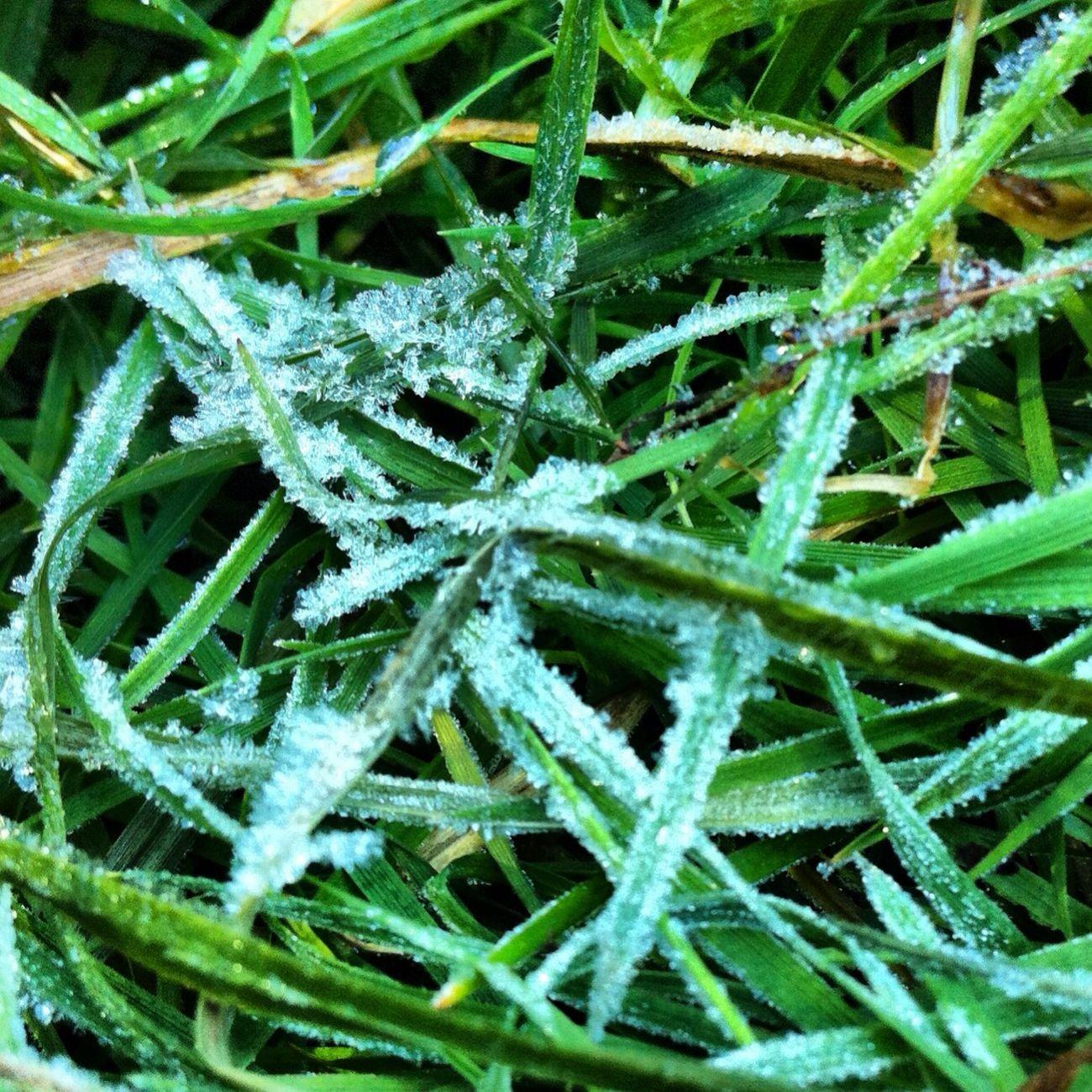น้ำแข็งบนยอดหญ้าค่ะ