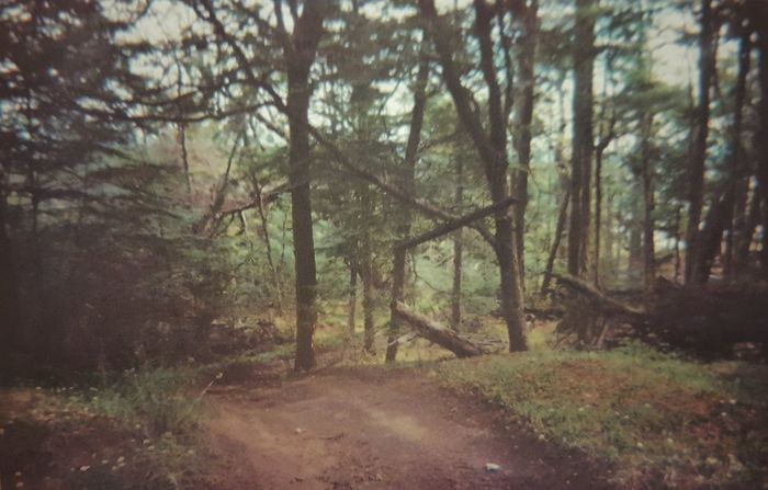 The Forest The Woods American South In Ushuaia EyeEm Best Shots Walking Around Analogue Photography Disposable Camera Disposablecamera Analog Photography