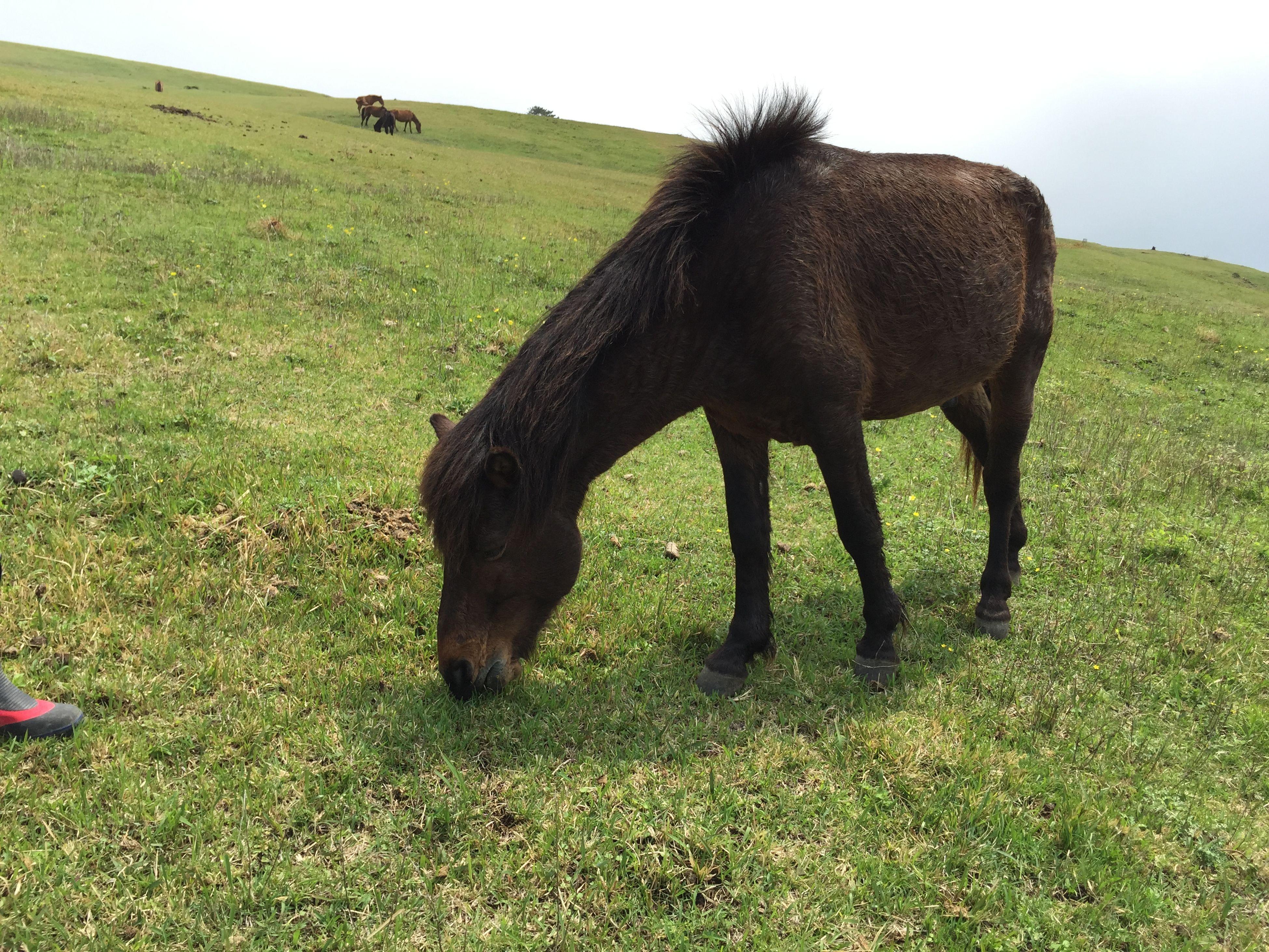 Horse Grass Wildlife Animals