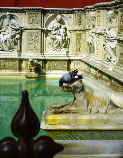 the kiss Animal Representation Animals Art And Craft Creativity Fountain Historical Italy Kiss Pigeon Pigeon Drinking Sculpture Siena Statue