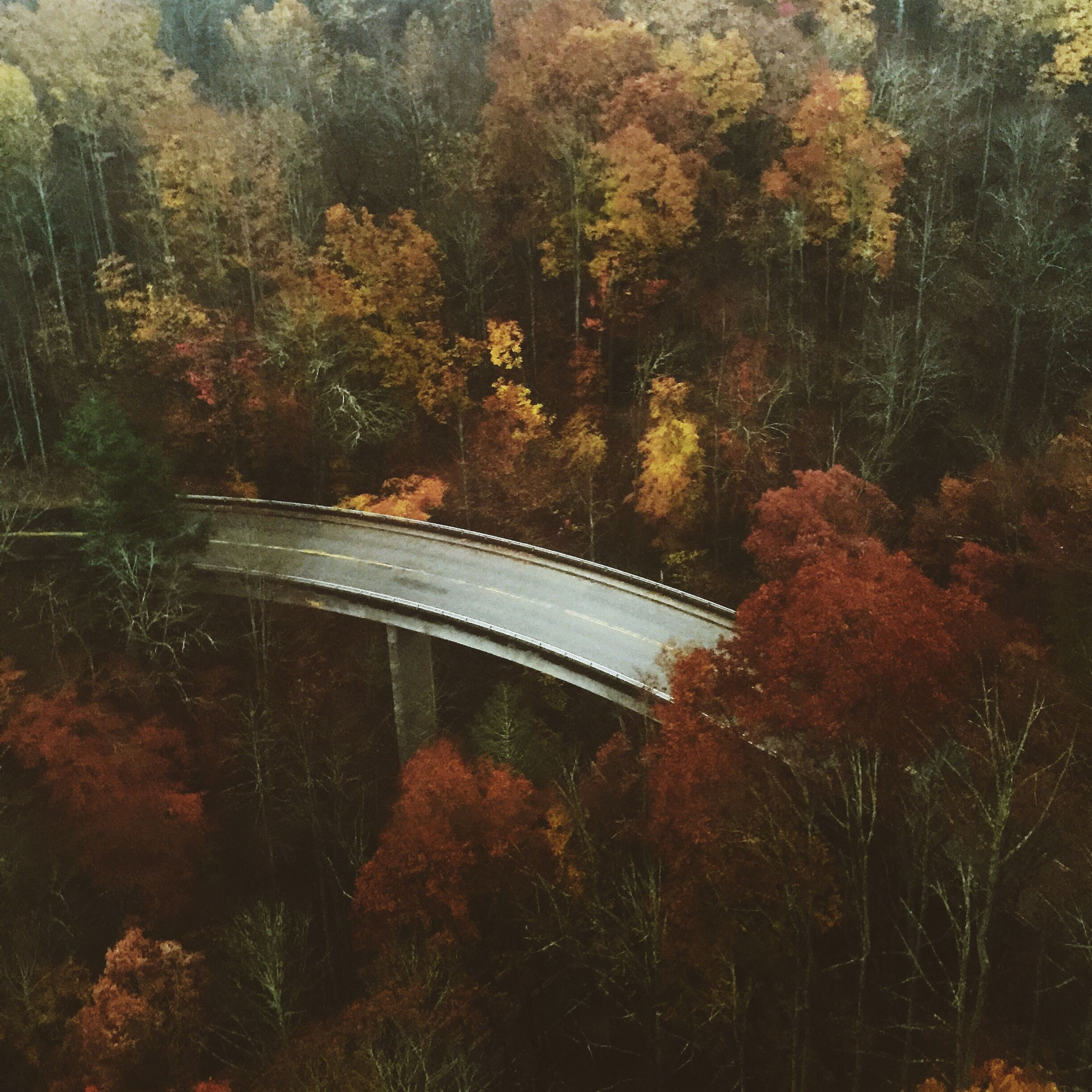 tree, transportation, forest, growth, nature, autumn, tranquility, bridge - man made structure, reflection, water, connection, high angle view, beauty in nature, outdoors, branch, no people, day, tranquil scene, river, plant