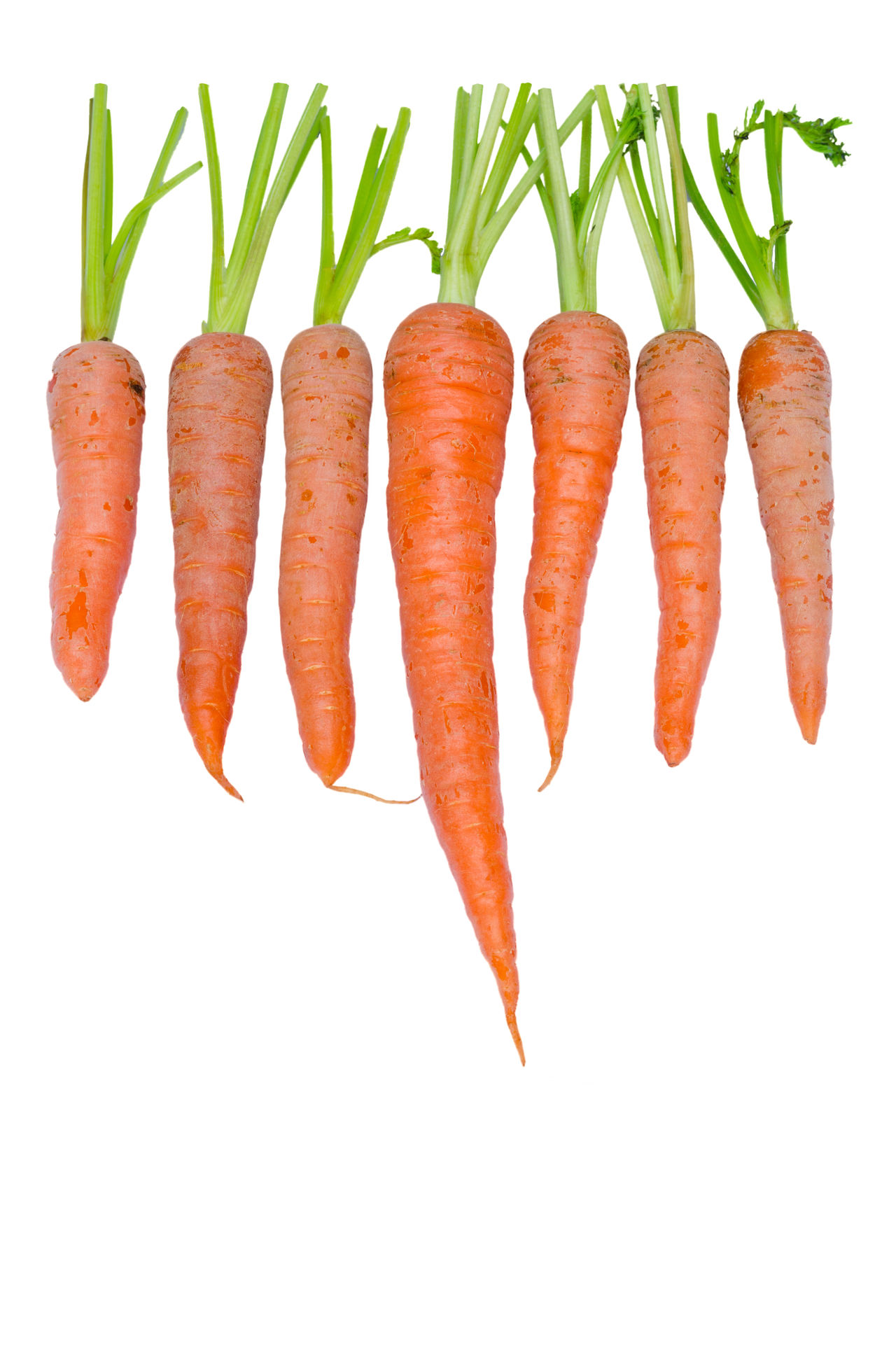 fresh carrots in a row isolated on white background Beta Carotene Carrot Close-up Dietfood Falcarinol Healthy Eating In A Row Isolated White Background Natural No People Nutrition Orange Color Raw Red Ripe Root Salad Top View Tuber Veganfood Vegetable Vegetarian Vitamin