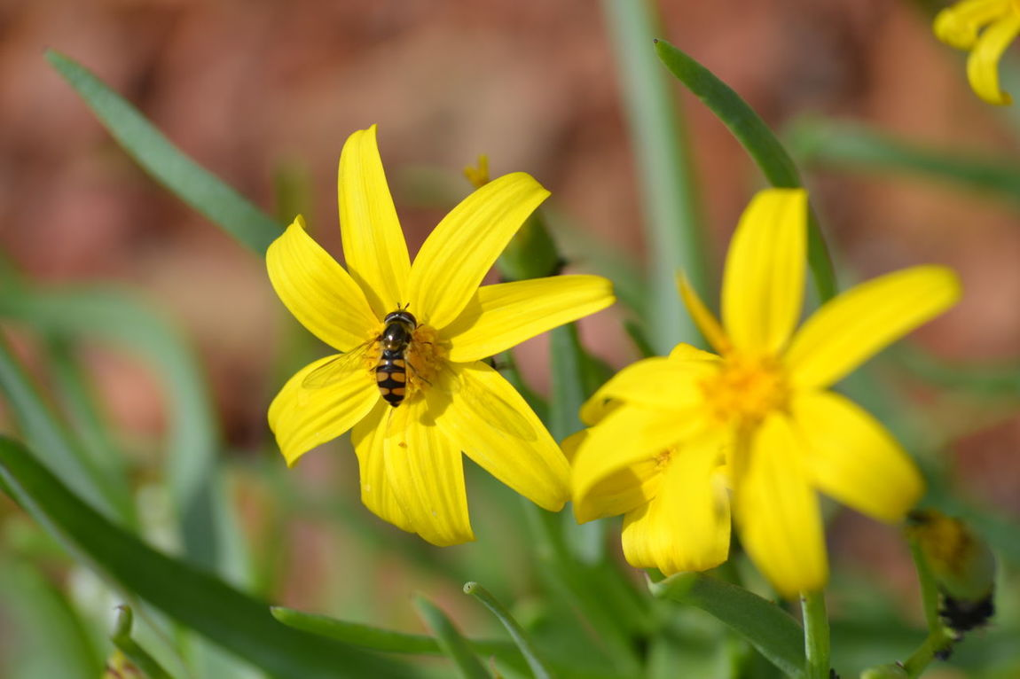 Animal Themes Beauty In Nature Close-up Flower Flower Head Freshness Insect Nature Petal Plant Pollination Yellow