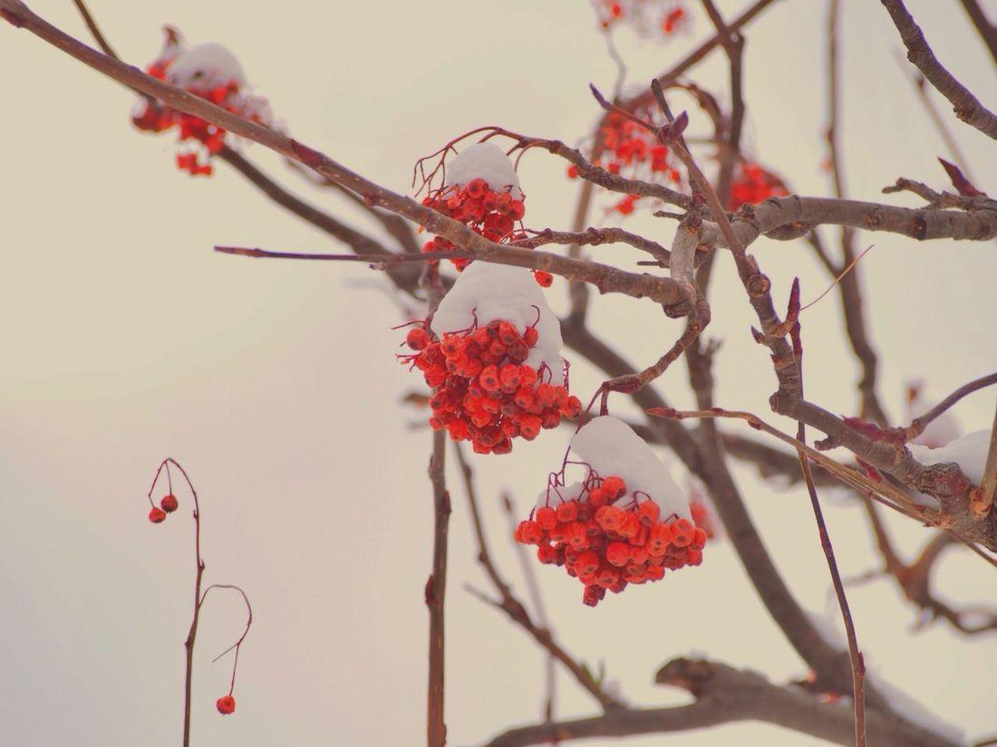 Eyeemnaturelover TreePorn Nature_collection